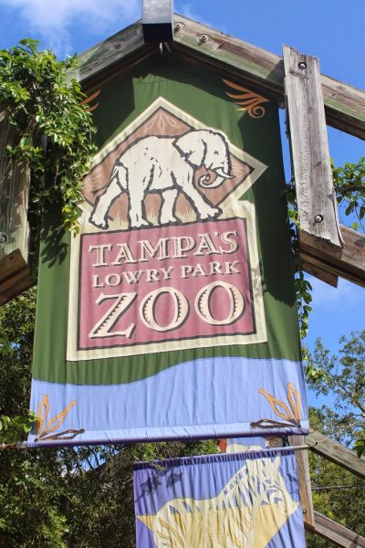 Top Tips for Visiting Tampa's Lowry Park Zoo