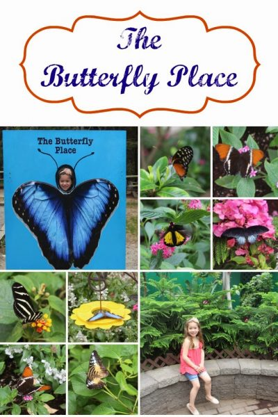 The Butterfly Place in Westford, Ma