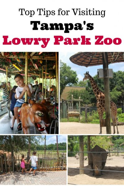 Top Tips for Visiting Tampa's Lowry Park Zoo as a Family