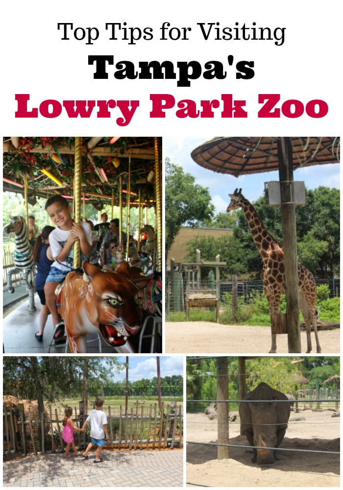 lowry-park-zoo-tampa