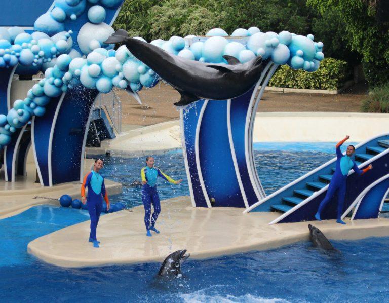 8 Amazing Reasons to Visit Sea World Orlando Florida!