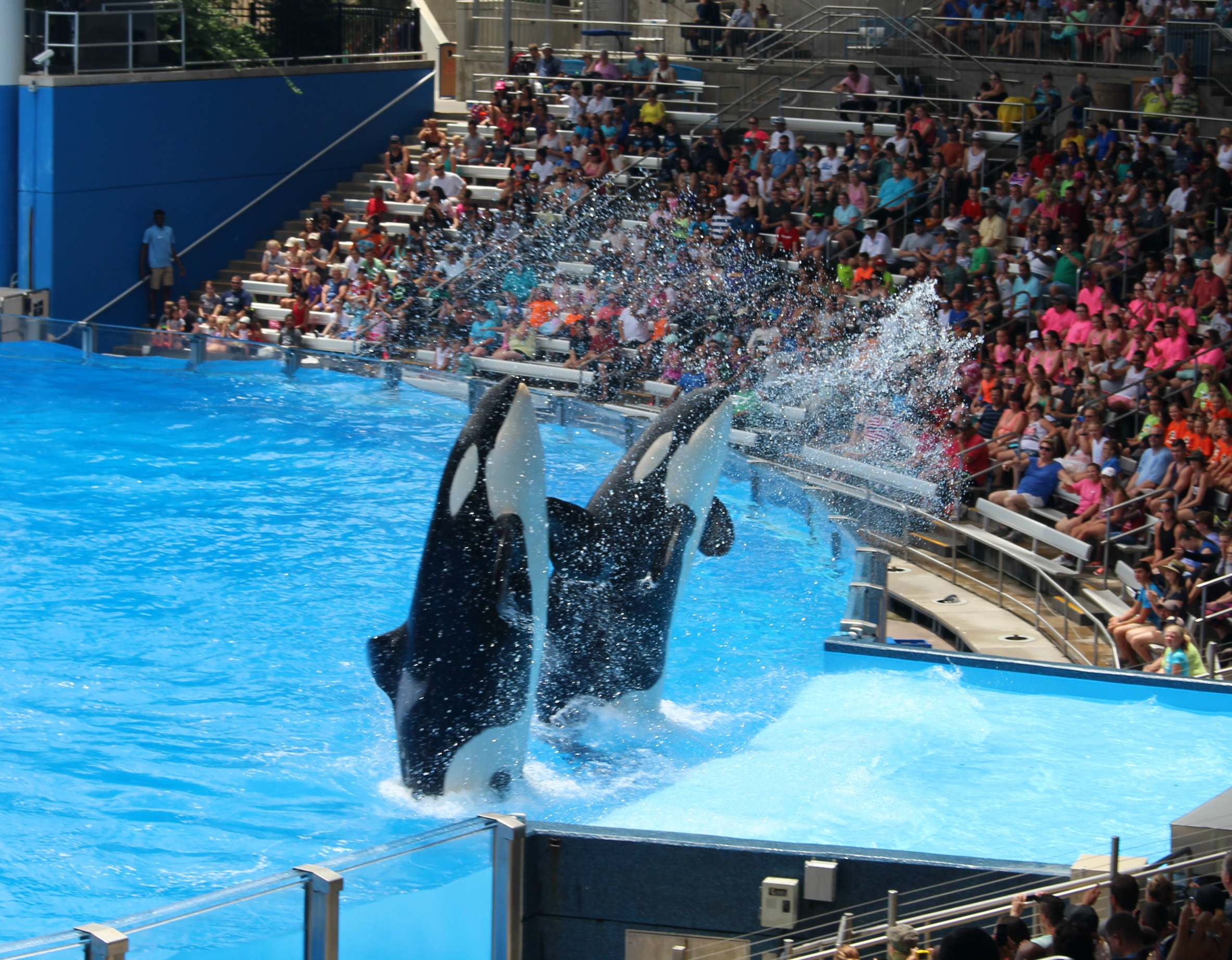 One-ocean-Orka-show-sea-world-killer-whale