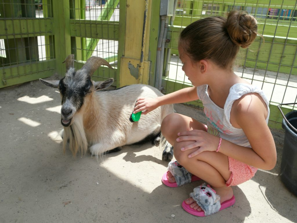 Petting Zoo at Tampa Lowry Park