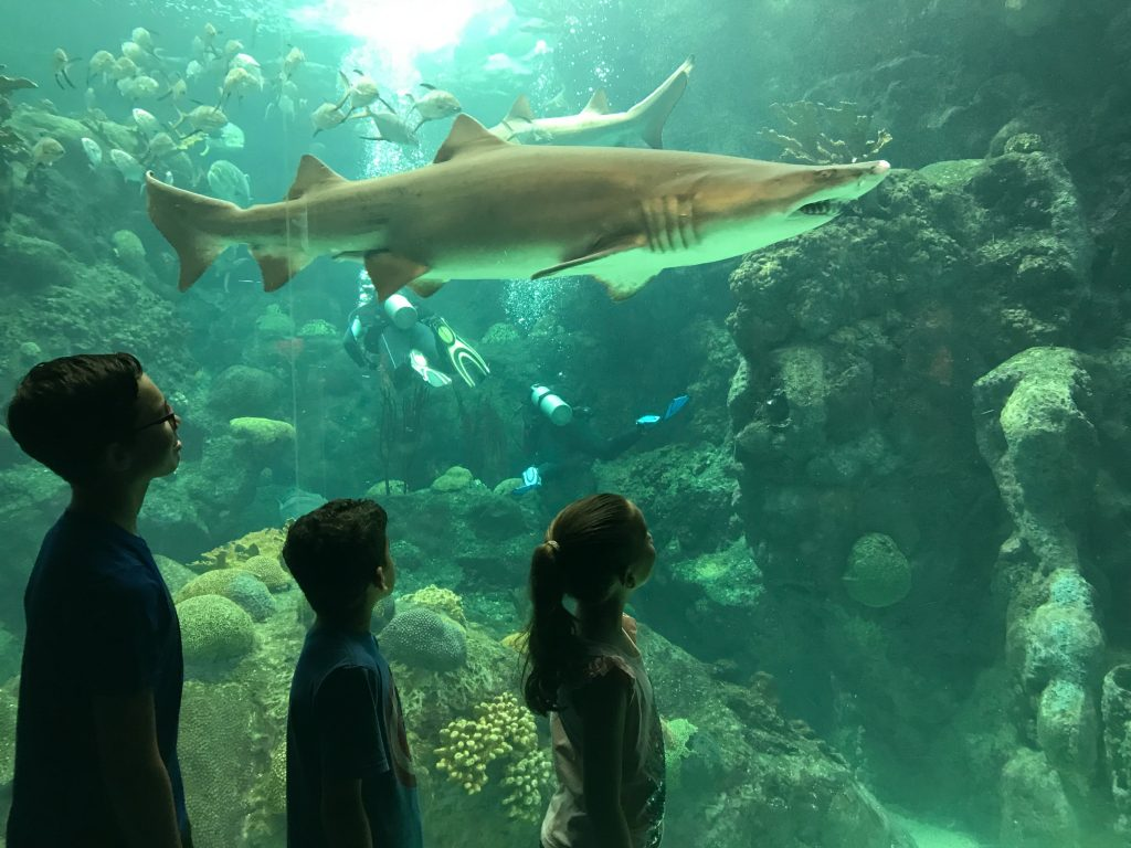 Sharks at The Florida Aquarium tampa