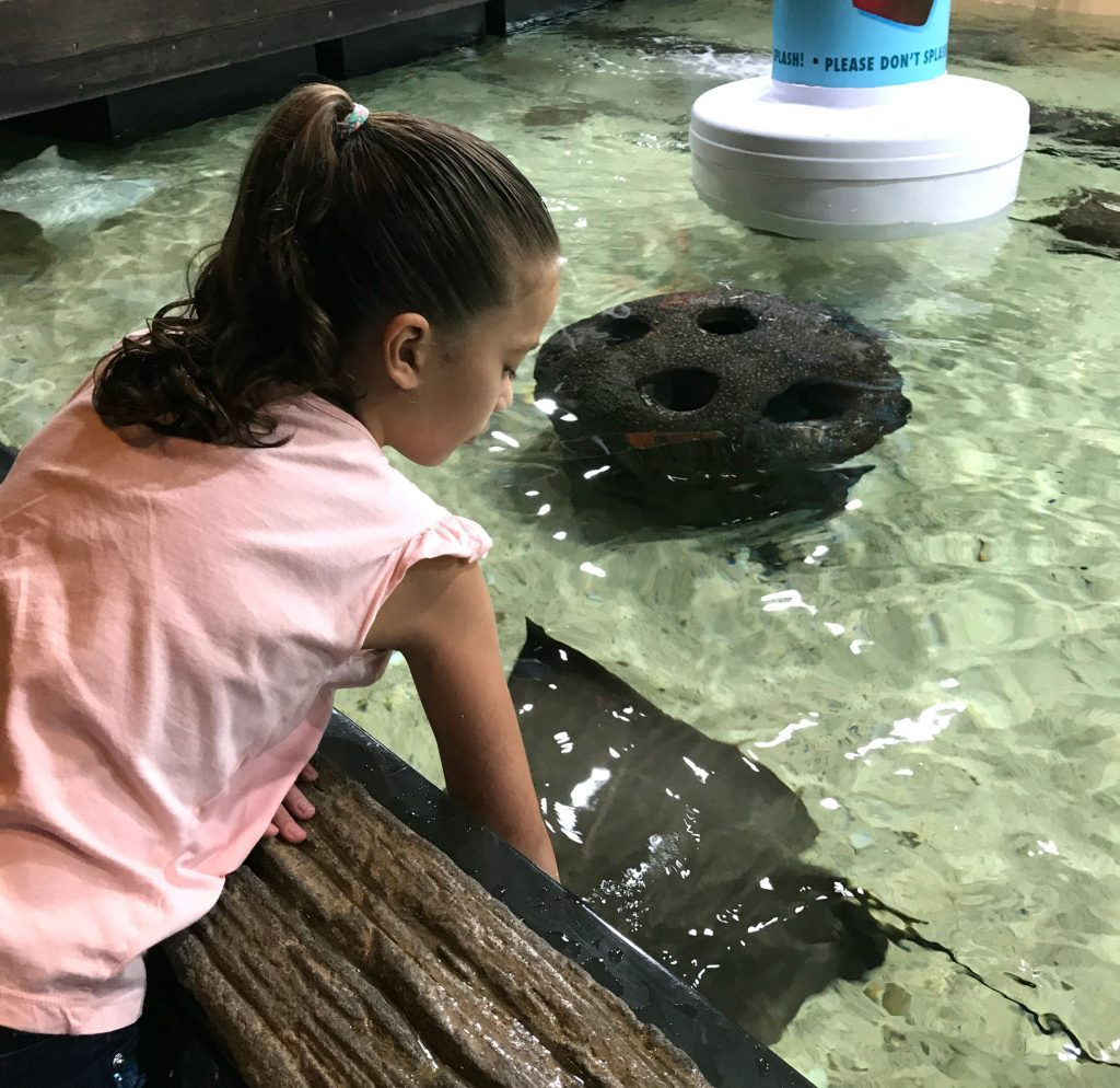 The Florida Aquarium touch tanks