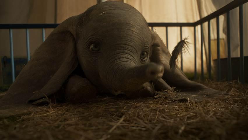Dumbo New 2019