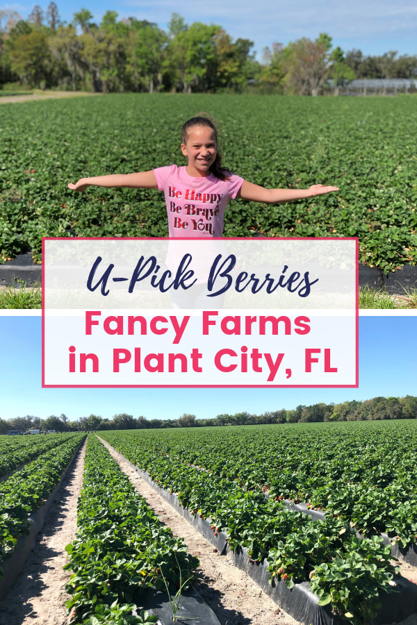 Fancy Farms U-Pick Plant City