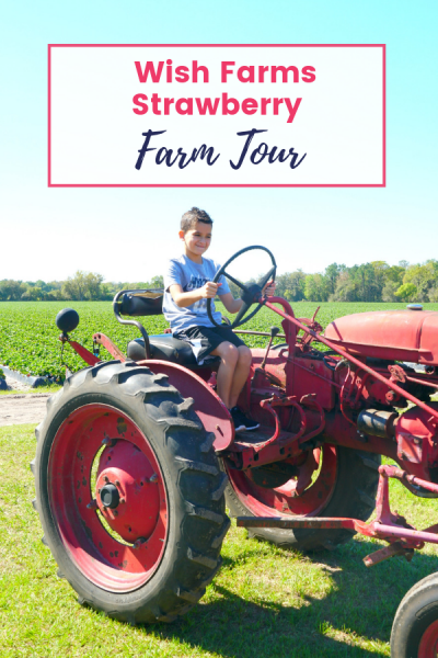 Wish Farms Strawberry Farm Tour – Strawberry Hot Fudge Popsicle Recipe