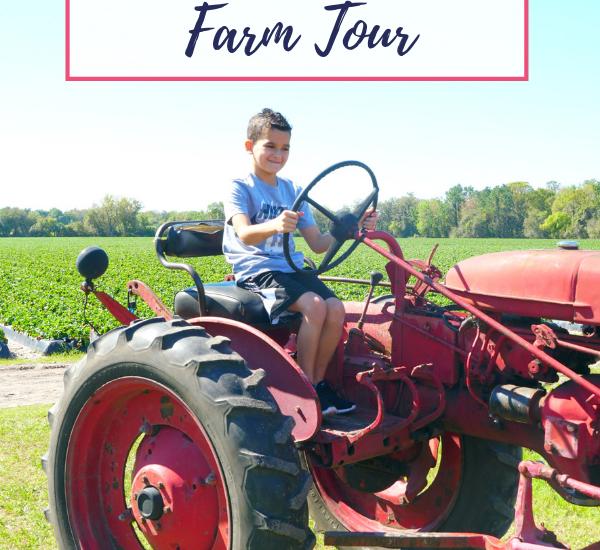 Wish Farms Strawberry Farm Tour
